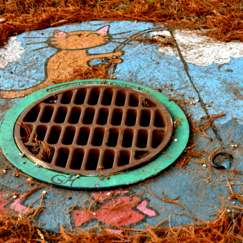storm drain with a cat fishing